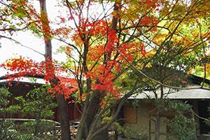murasakitei_photo02