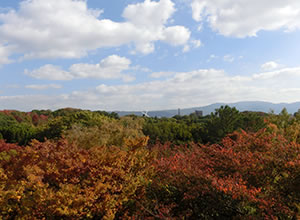 kokusai_photo14